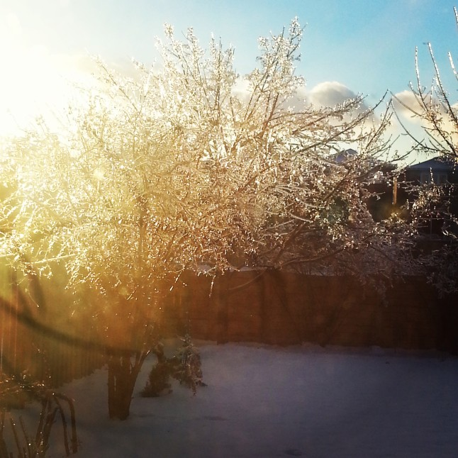 "Looking at the beautifully icycle covered tree , as the sun shines on it, in my backyard after the ice storm last week reminded me that beauty exists even after the storm.  Just like breathing in and breathing out, we need to remember:  ""Remain calm when a storm hits your life and remember the sun is never too far away."" :)"