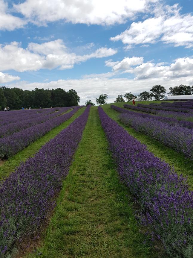 laveanne_field.jpg